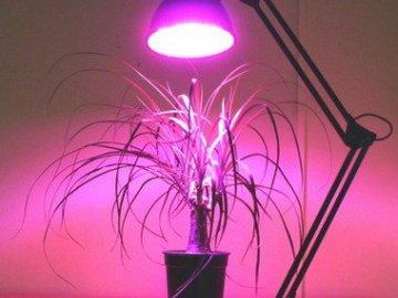 Какой свет нужен растениям