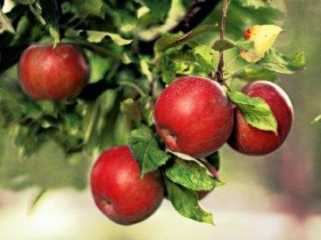 Как ухаживать за яблоней после посадки