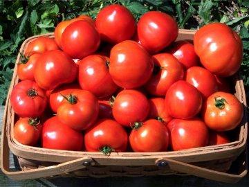 Томаты с высокими урожаями плодов