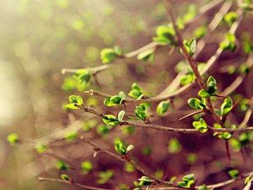 Вегетационный период – что это такое?