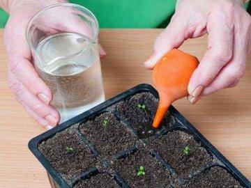 Как превратить семена в цветы