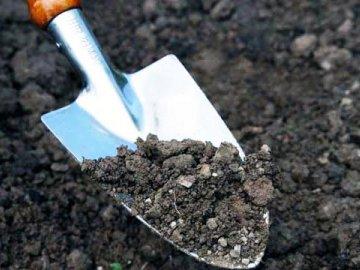Выбор и подготовка места и почвы для растения