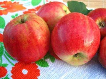 Осенние сорта яблонь для Подмосковья