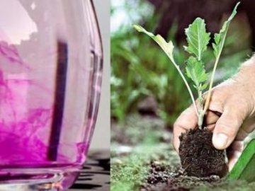 калия или раствор высокой концентрации вызывает ожоги. Чем полезен перманганат калия для растений?