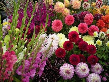 Рекомендации по созданию непрерывно цветущей клумбы
