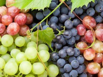 Изабельные сорта винограда