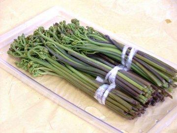Применение папоротника орляка в кулинарии и медицине