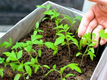 Создаем условия для выращивания: температура и освещение