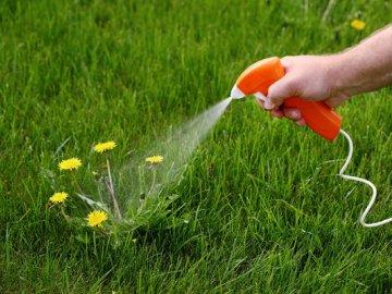 Уничтожение сорняков химическим методом