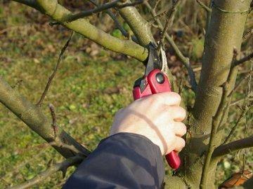 Проведение омолаживания дерева