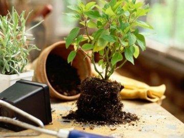 Противопоказания в подкормке растений дрожжами