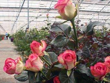 Выращивание и основные правила ухода