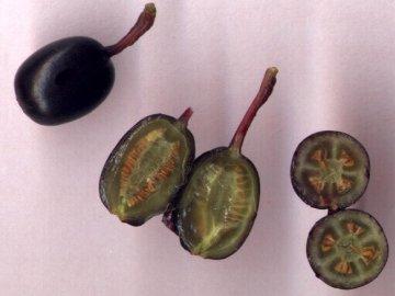 Выращивание с помощью семян