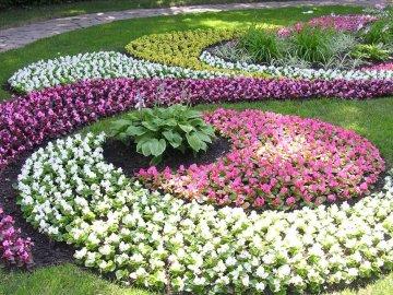Сочетания многолетних и однолетних цветов