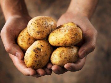 Особенности технологии возделывания картофеля