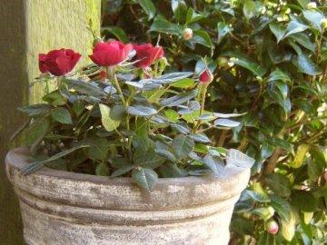 Советы по уходу: полив и подкормка