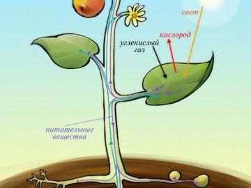 Питание растений: виды