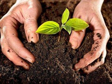 """Понятие """"живая почва"""" - что это такое"""