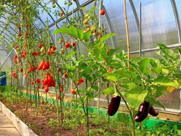 Правила выращивания и севооборота