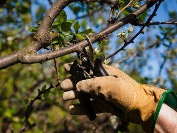 Основные правила обрезки деревьев