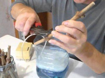 Подготовка черенков, их проращивание