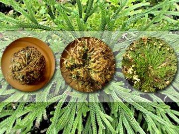 Жизненный цикл растения