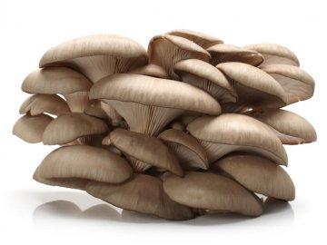 Описание гриба вешенка