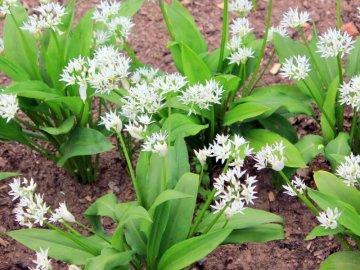 Посадка растения: сроки и правила