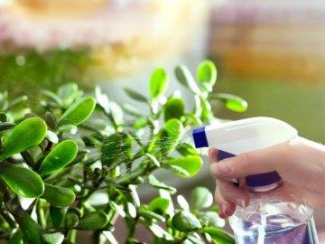 Полезные советы: как грамотно ухаживать за растением