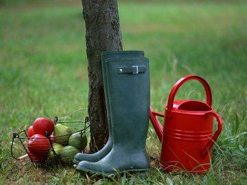 Уход за садом и огородо осенью