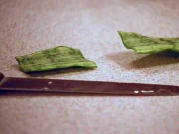 Особенности размножения листом