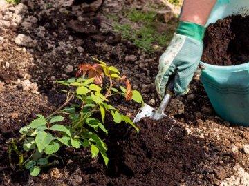 Методы размножения, правила посадки растения