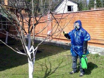 Что делать, как вылечить дерево?
