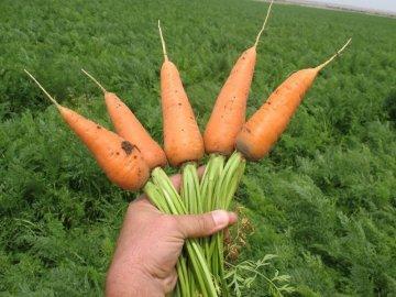 Уборка и хранение овоща
