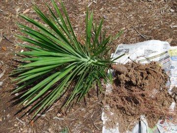 Сроки и правила посадки растения