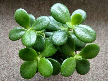 Полезные свойства растения для человека