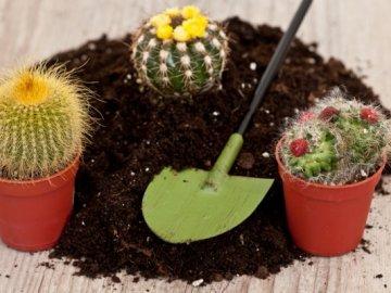 Как правильно приготовить землю в домашних условиях?
