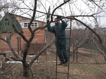 Обрезка пожилых яблонь для омоложения