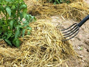 Биологические методы от сорняков