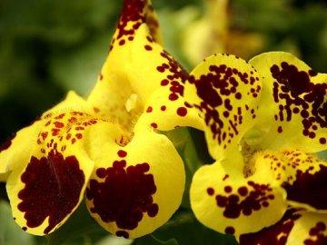 Советы по пересадке цветка