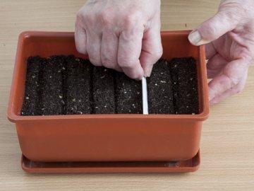 Способы посадки семян на рассаду