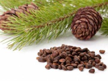 Семенной метод размножения хвойных деревьев