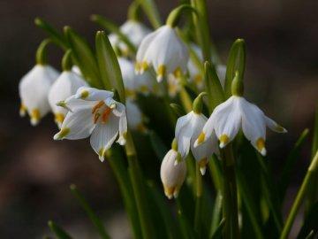Борьба с вредителями цветка