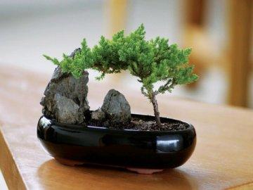 Как вырастить дерево в миниатюре в домашних условиях