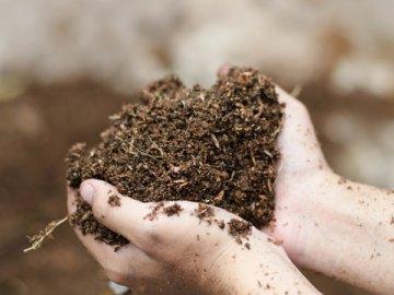 Низкая кислотность почвы: как ее повысить