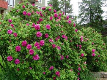 Советы по уходу за растением