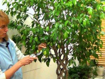 Полезные советы: как правильно ухаживать за растением