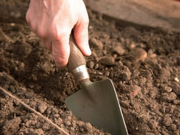 Подготовка почвы и посадочного материала к посадке