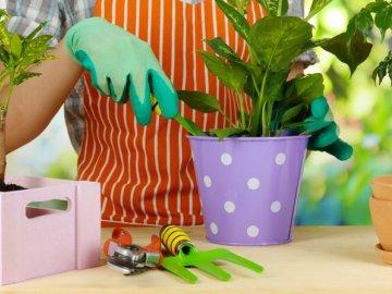 О пересадке растений летом (июнь, июль, август): в какие дни лучше