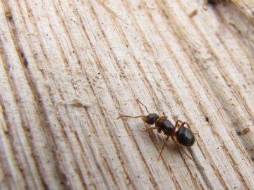 Профилактика от муравьев